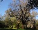 efteraar2011_michael_02-jpg
