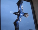 Irene-02 graavejr-ravn