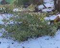 Henrik04-sne