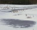 Leif03_sne