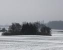Leif04_sne
