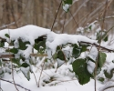 Michael02-sne