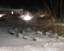 Finn01-sne
