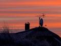 Kresten Thomsen_03_Silhouet_Vintermorgen Vestjylland