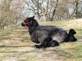 nyfødte lam i Bregninge bakker
