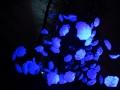 Luminis_Anette_01