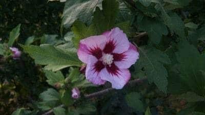 Kreativt blomsterfoto_Henrik_002