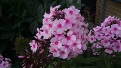 Kreativt blomsterfoto_Henrik_007