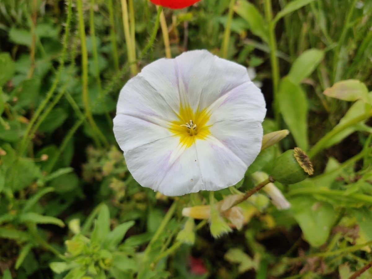 Kreativt blomsterfoto_Henrik_013